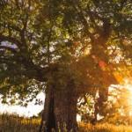 De Revanche Van De Dode Bomen